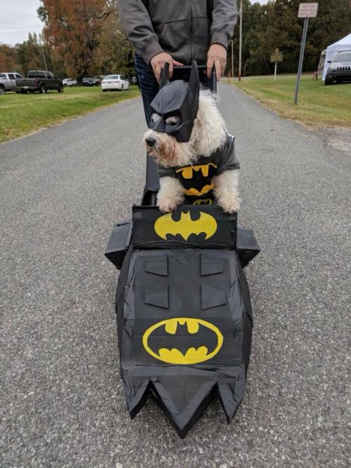 wooftober picture dog in batman costume